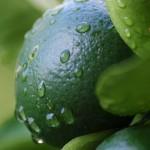 rainy lime